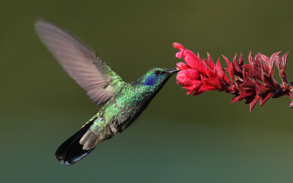 Why You Don't Need to Worry About Google's Hummingbird Update